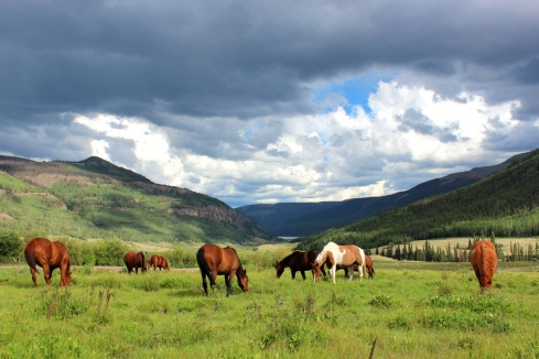 horses on pasture in between storms