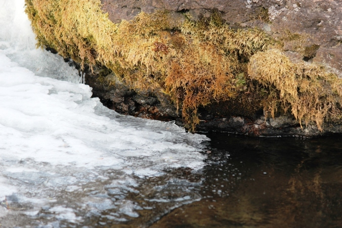 moss rock water ice