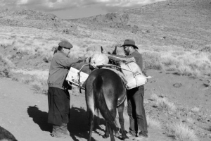 alcides and bob repacking the mule (640x427)