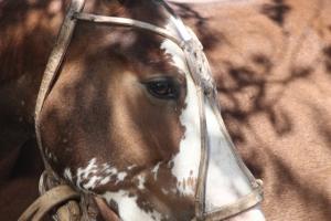 chano's horse (640x427)
