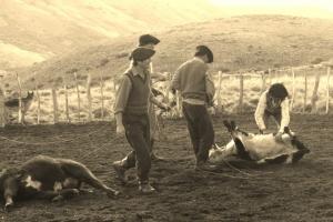 steer wrestling 2 (640x427)