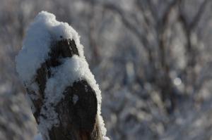 snow on cedar post