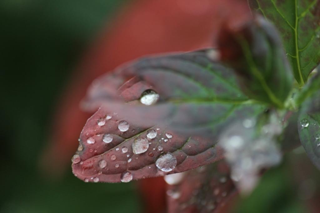 morning rain on turning leaves