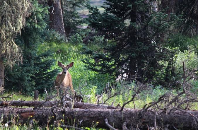 visitor at camp