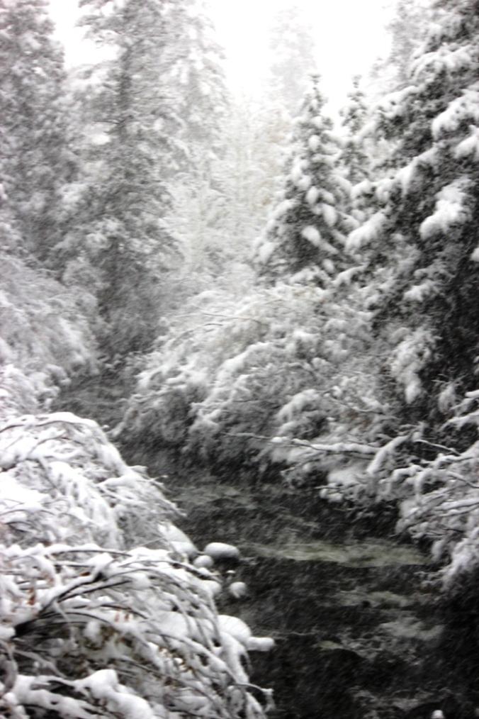 lost trail creek