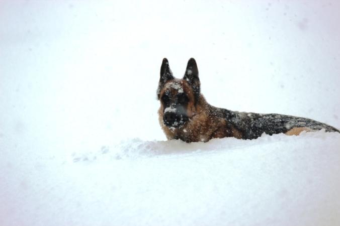 gunnar in snow 2