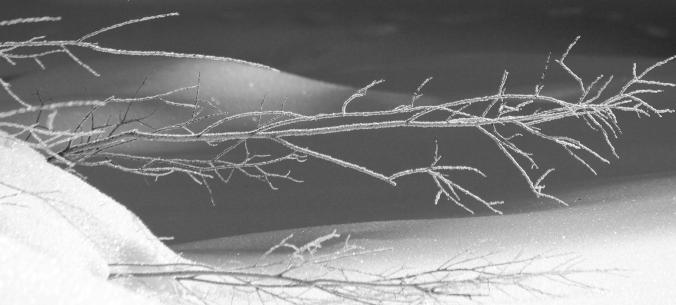 frosty branches under bridge