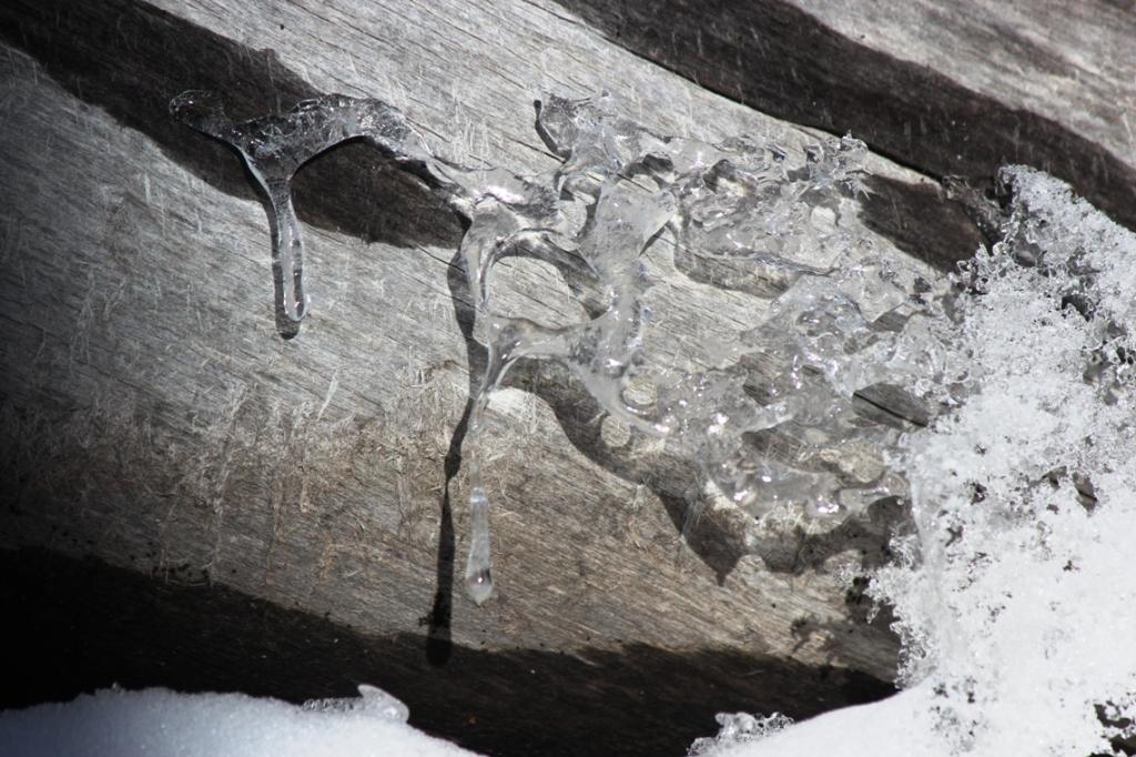 ice on old wood