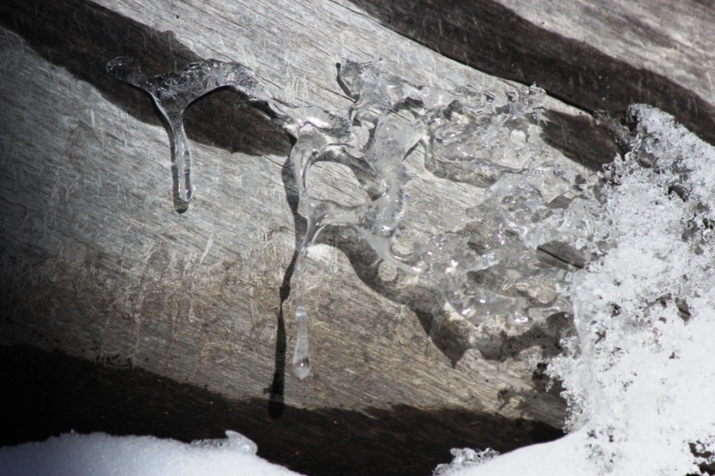 ice on old wood
