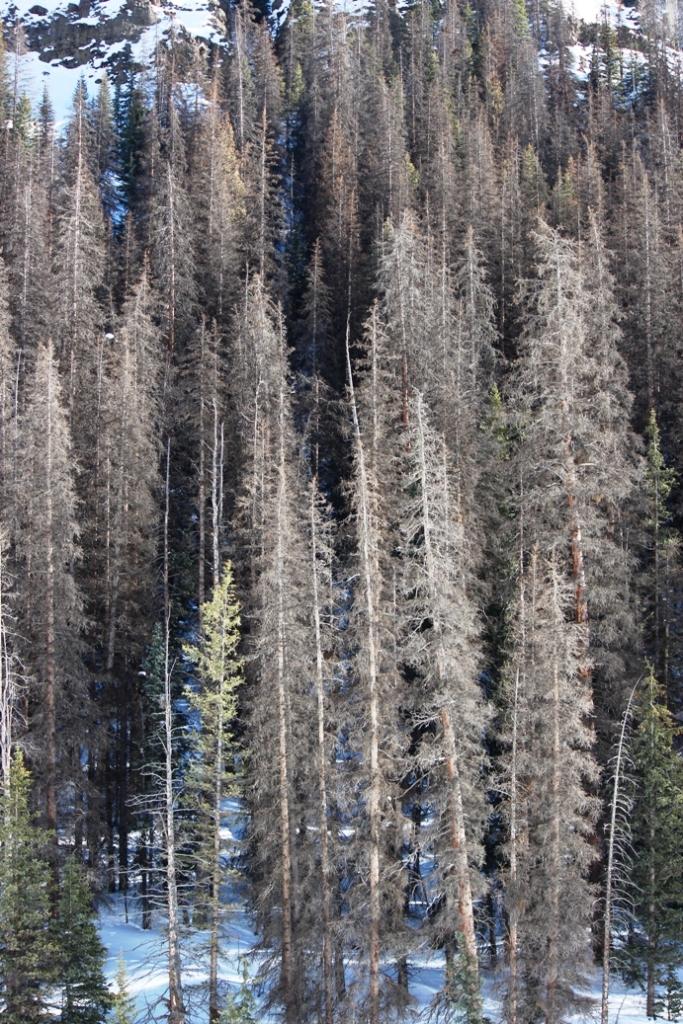 lost trail trees 2