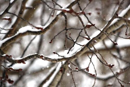 snow on aspen 2