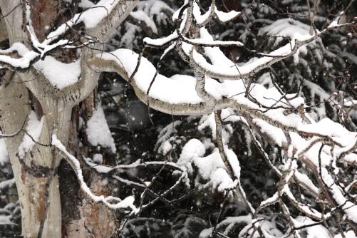 snow on aspen