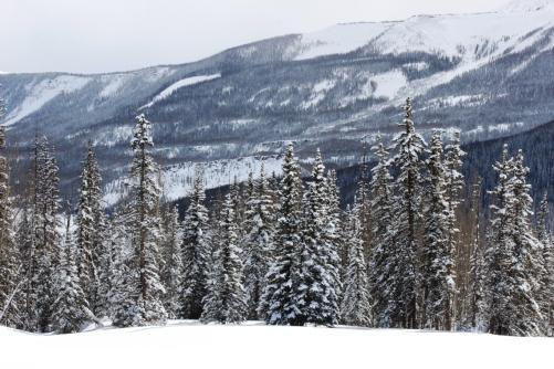 fresh snow on bottom of elk trail