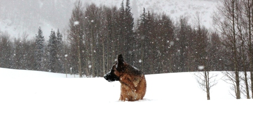 gunnar in the snow