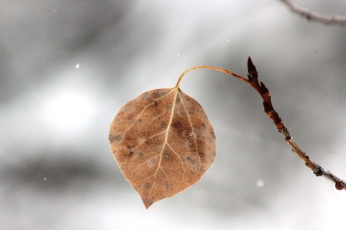 fall leaf with spring swelling