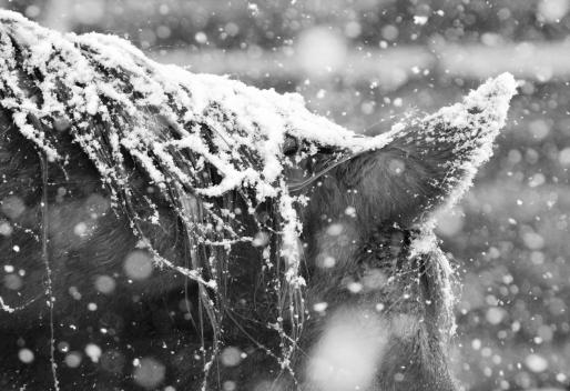 tres in snow