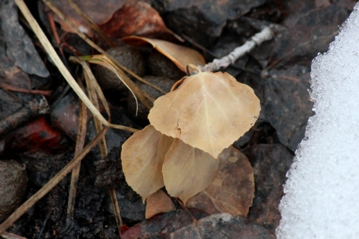 leaves in thaw