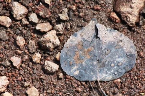 spring leaf 2