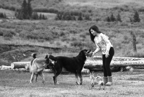 trin and dogs