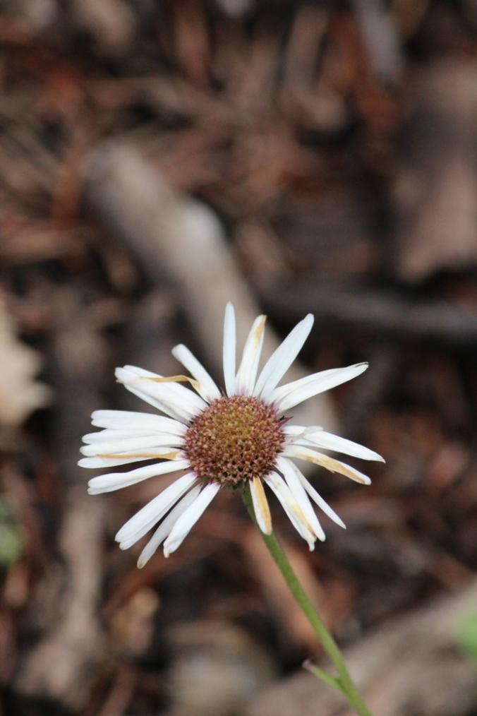 fading flower