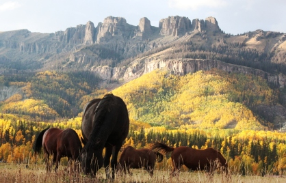horses on fall pasture 2
