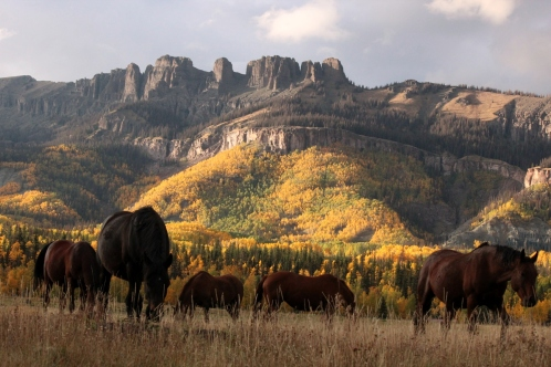 horses on fall pasture
