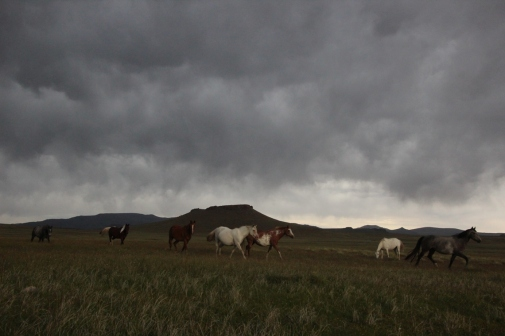 evening clouds and horses