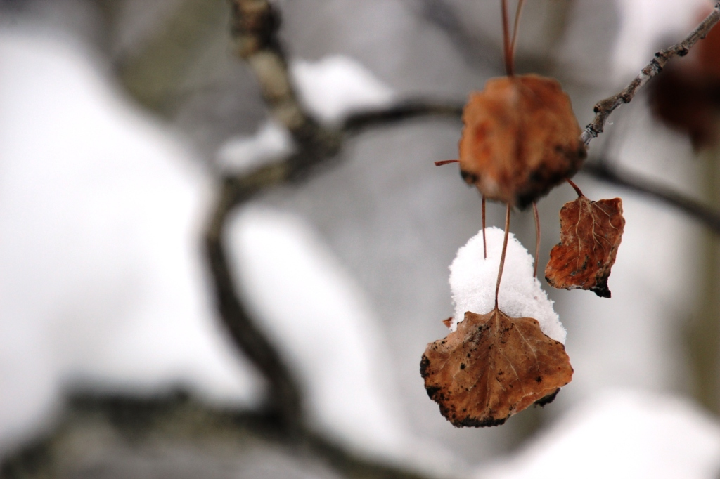fall leaves in winter snow